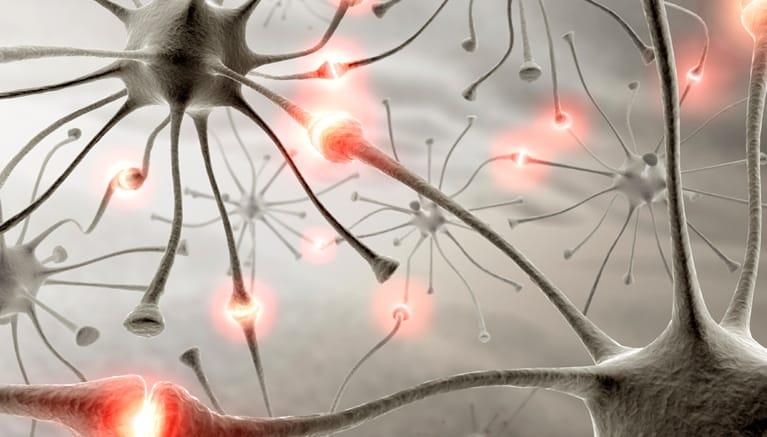 European Project NEURIMP neurons